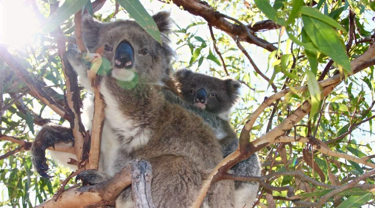 wildlife tour port lincoln