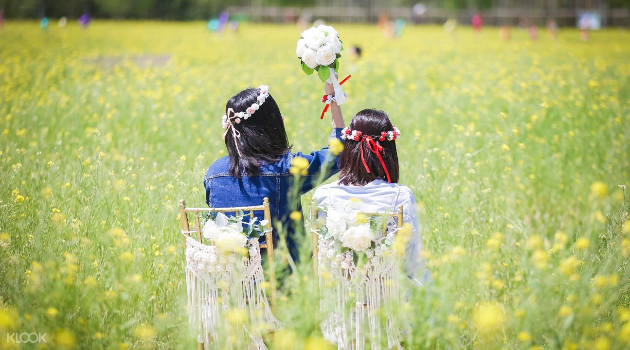 canola flowers in busan south korea