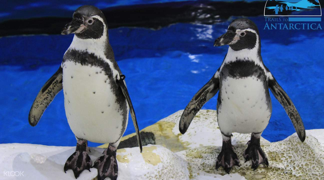 manila ocean park penguins