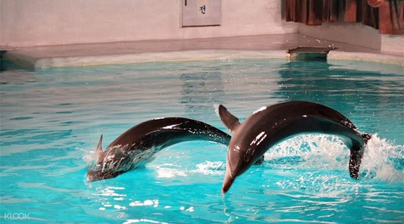 济州岛太平洋乐园动物表演