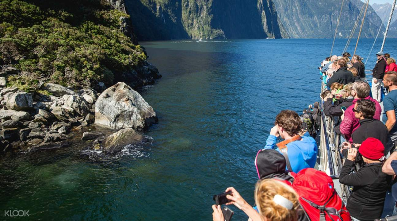 米爾福德峽灣風景觀光遊船體驗