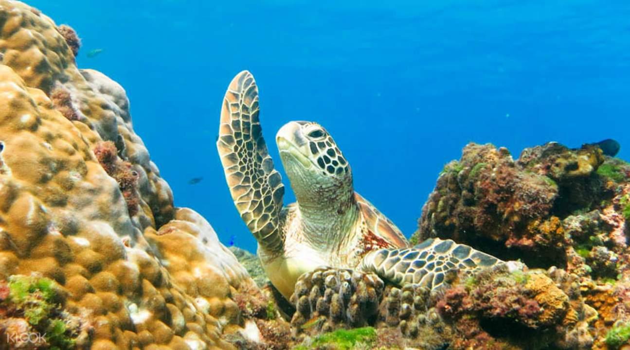 與海龜深潛