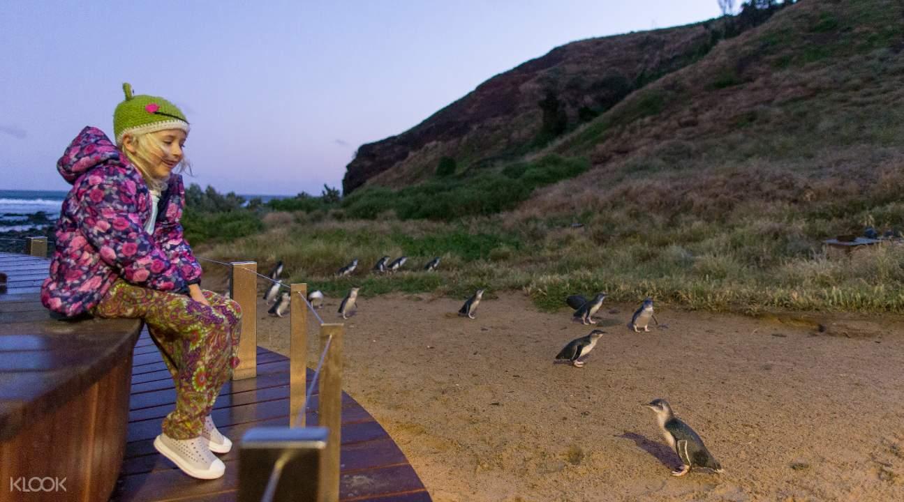 菲利浦島企鵝歸巢