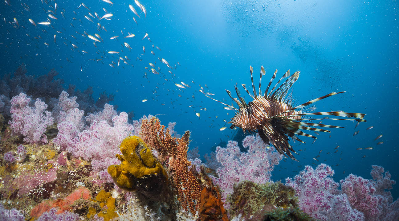 蘇林群島浮潛