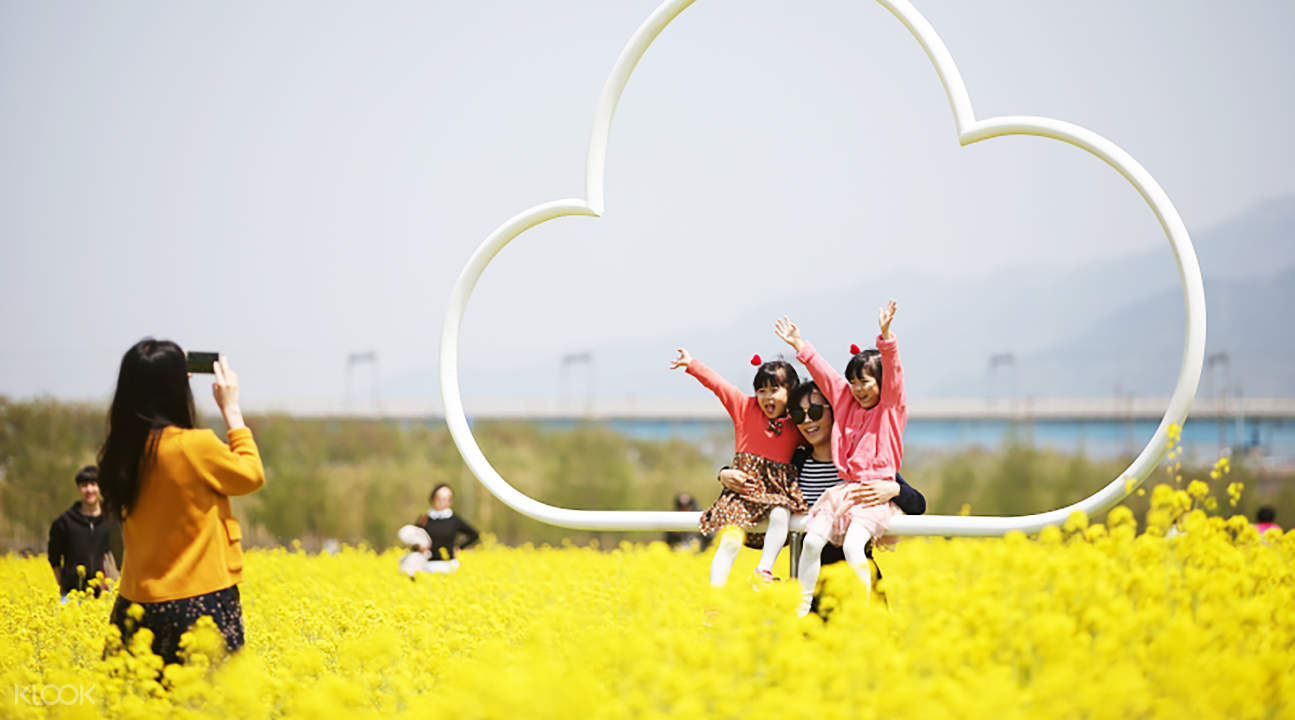 canola flowers in busan