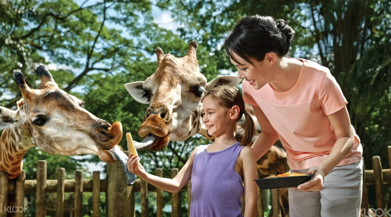 新加坡动物园早餐