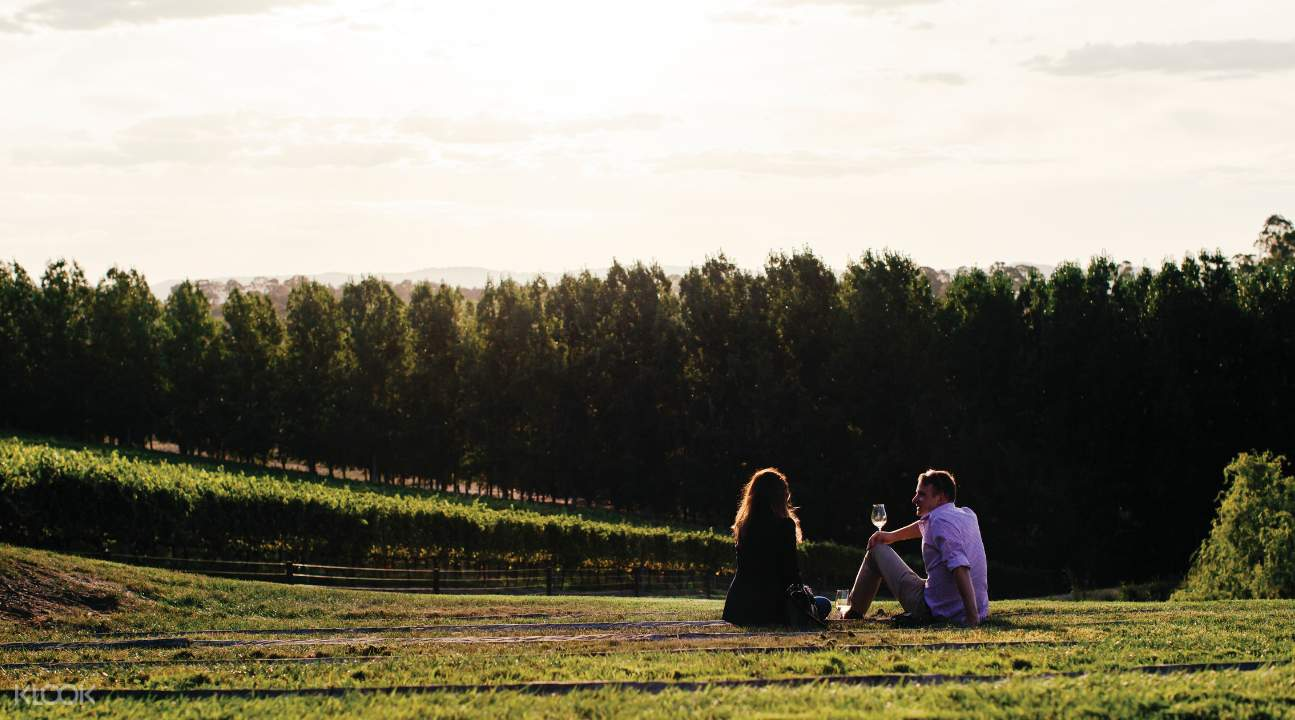Yarra Valley Wineries tour