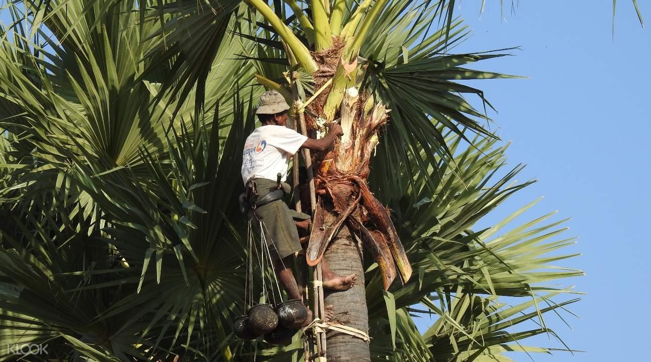 瑞莱村棕榈树