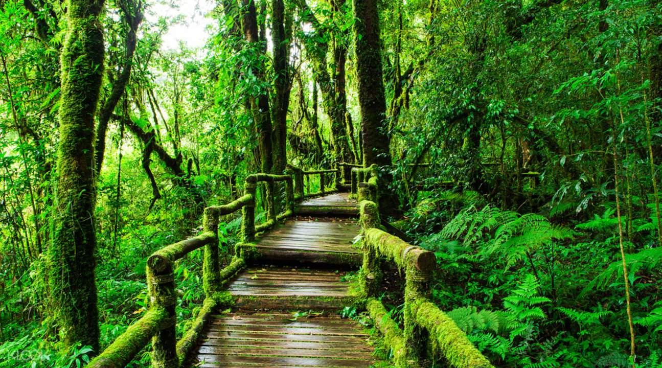 wooden path in kiew mae pan