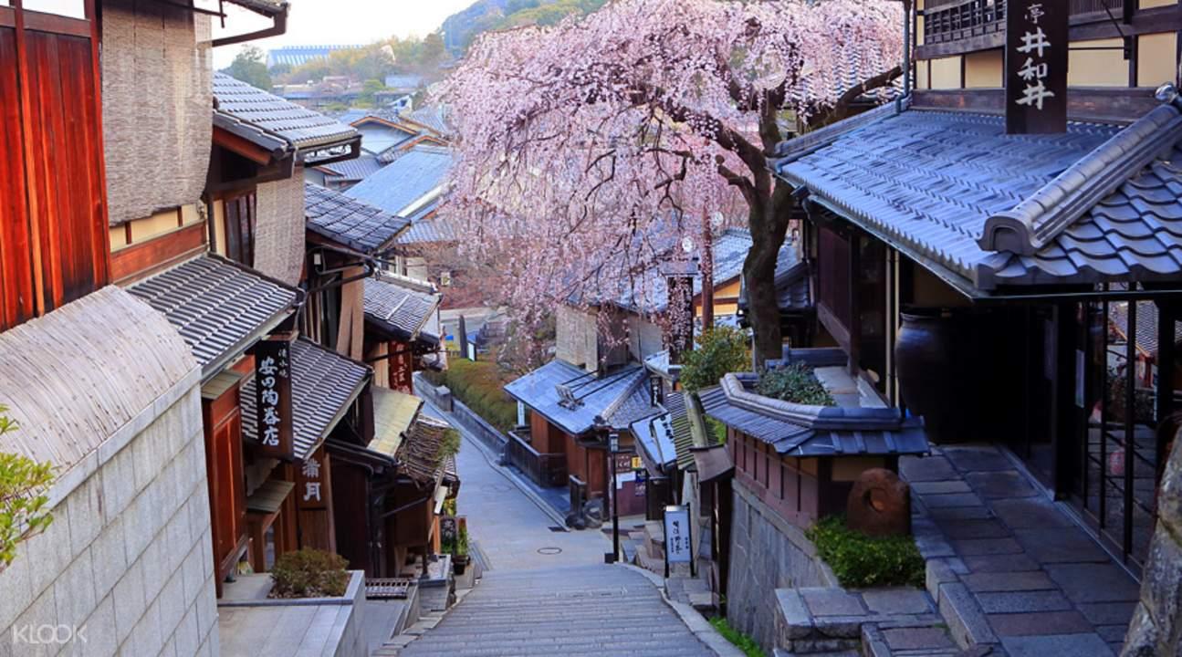 京都赏樱行程