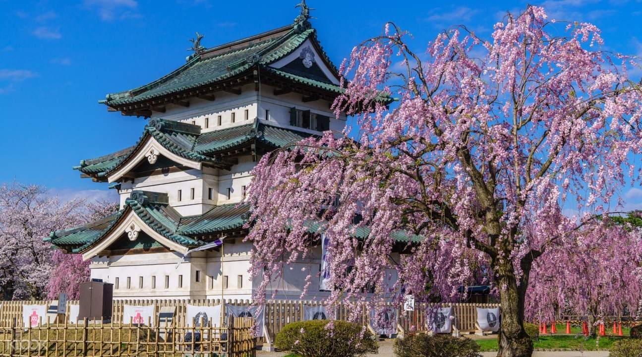 弘前公园赏樱