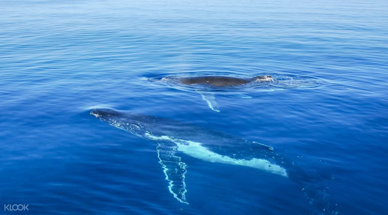 費沙島賞鯨半日遊