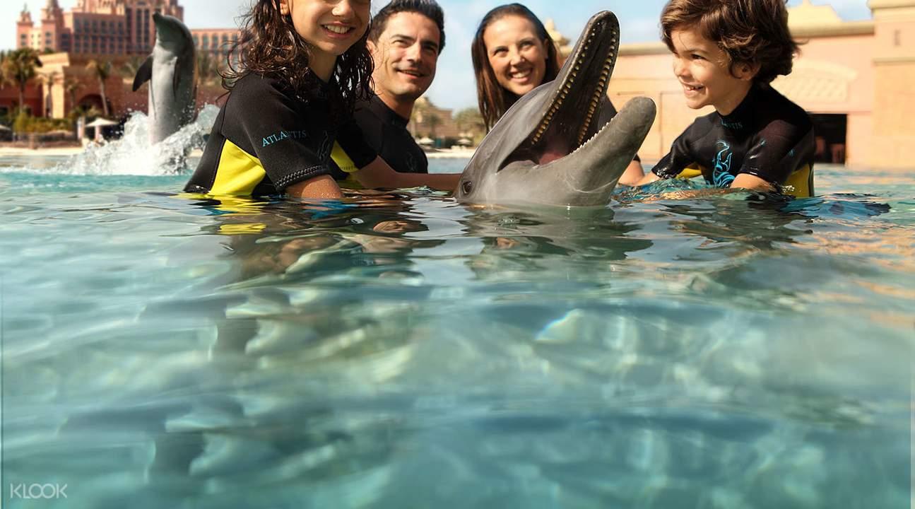迪拜海豚互动