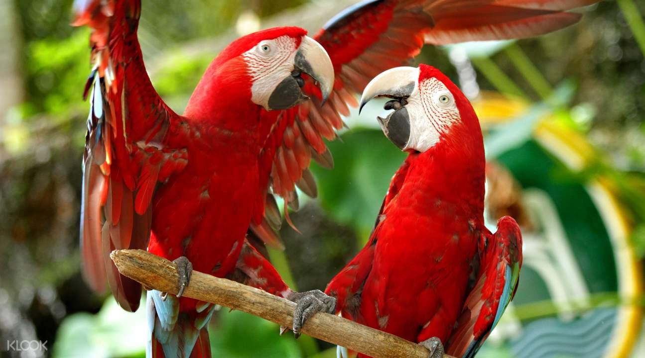 爱化摩沙野生动物园鹦鹉