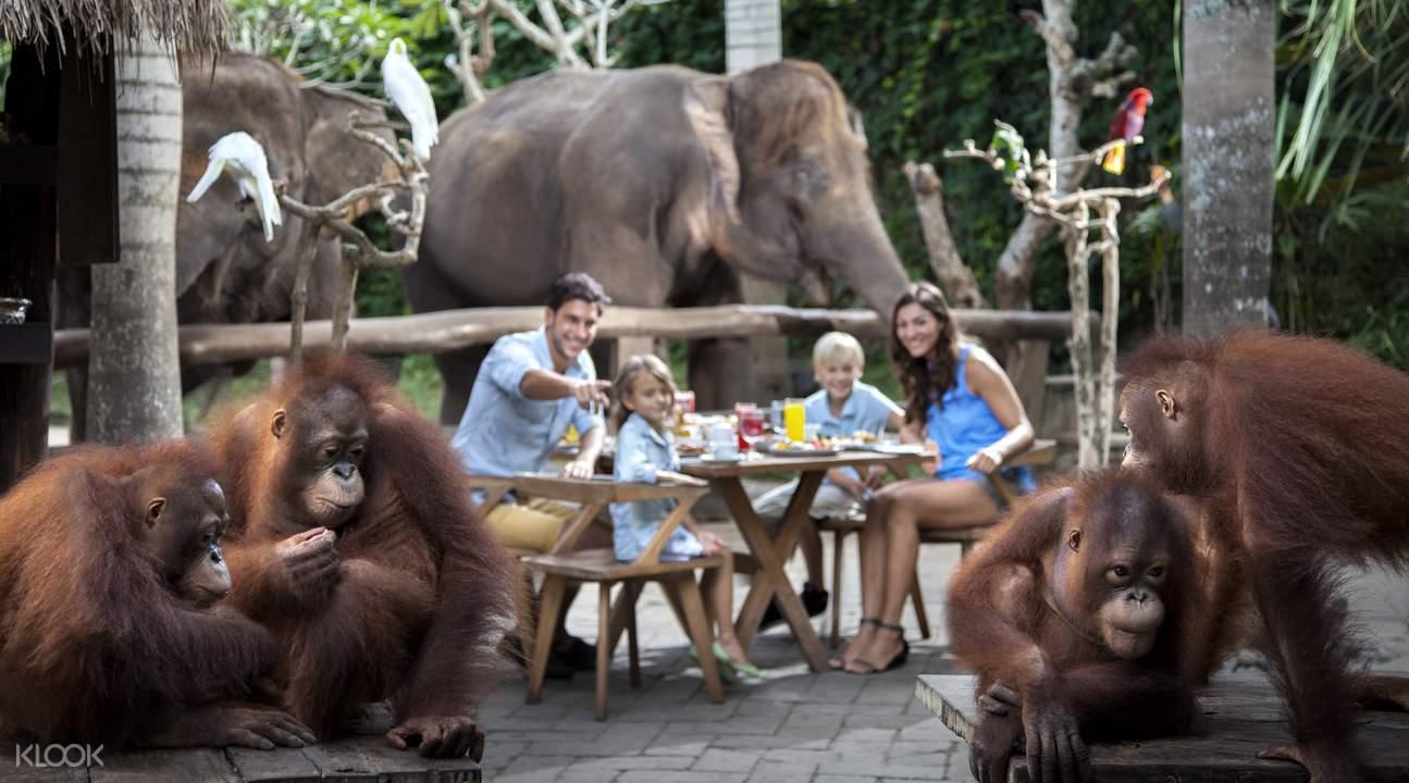 Bali Zoo breakfast