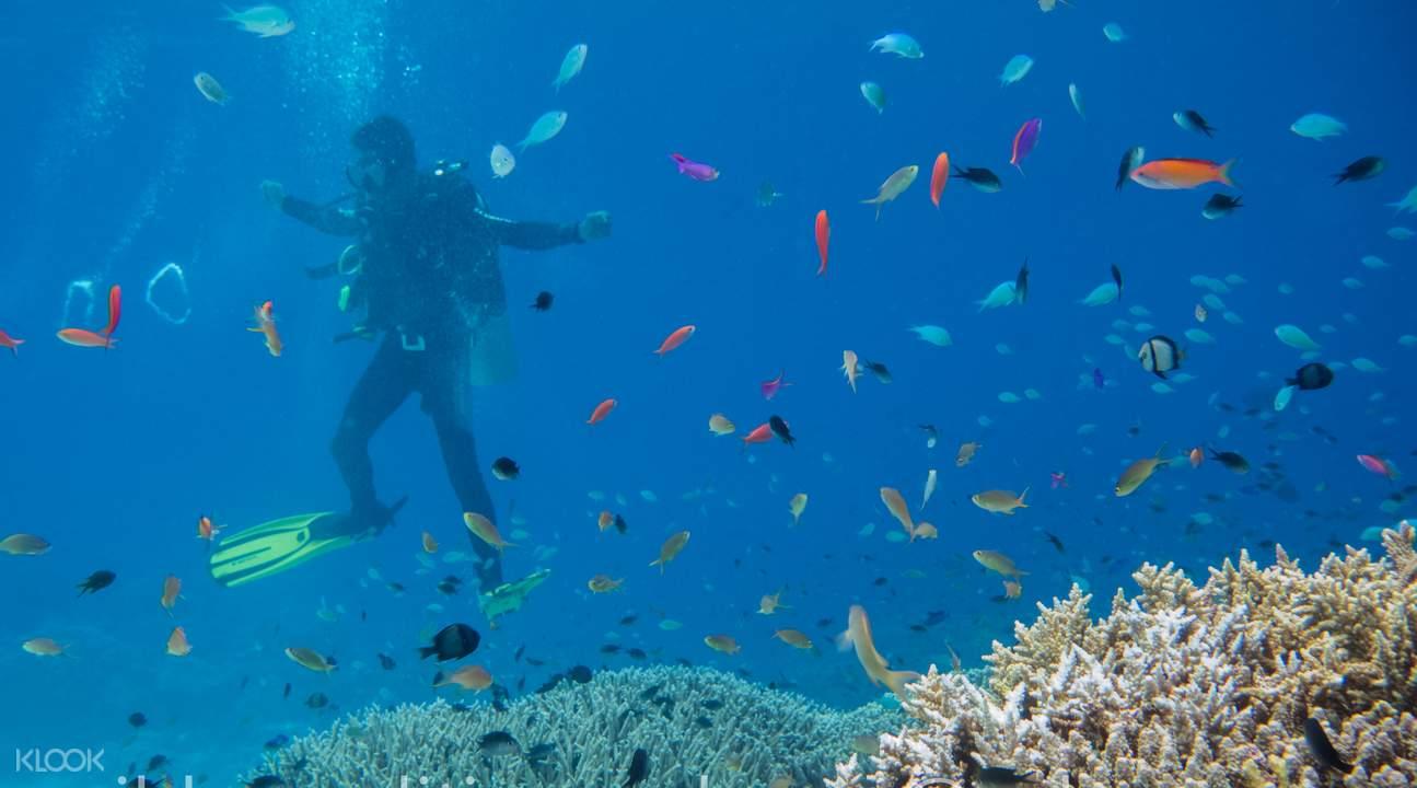巴拉望普林塞薩港潛水一日遊