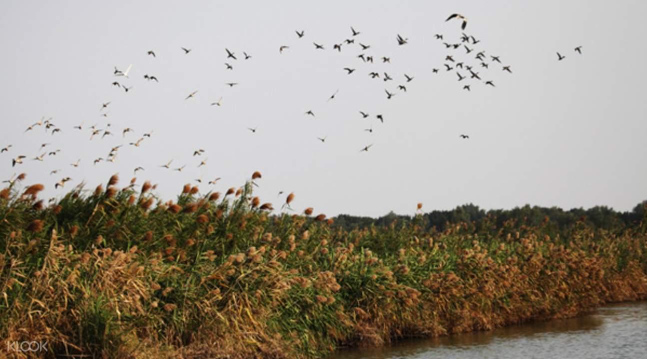 nansha wetland park guangzhou china