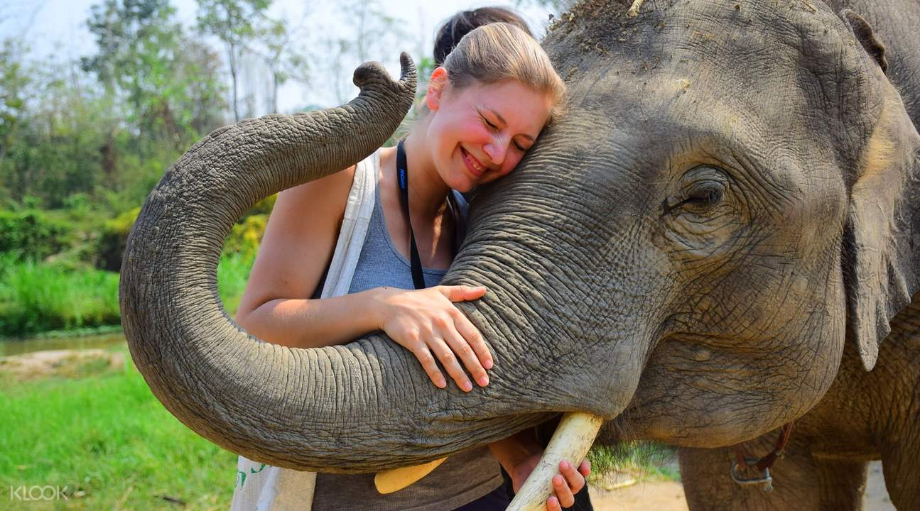 elephant retirement park tour chiang mai thailand