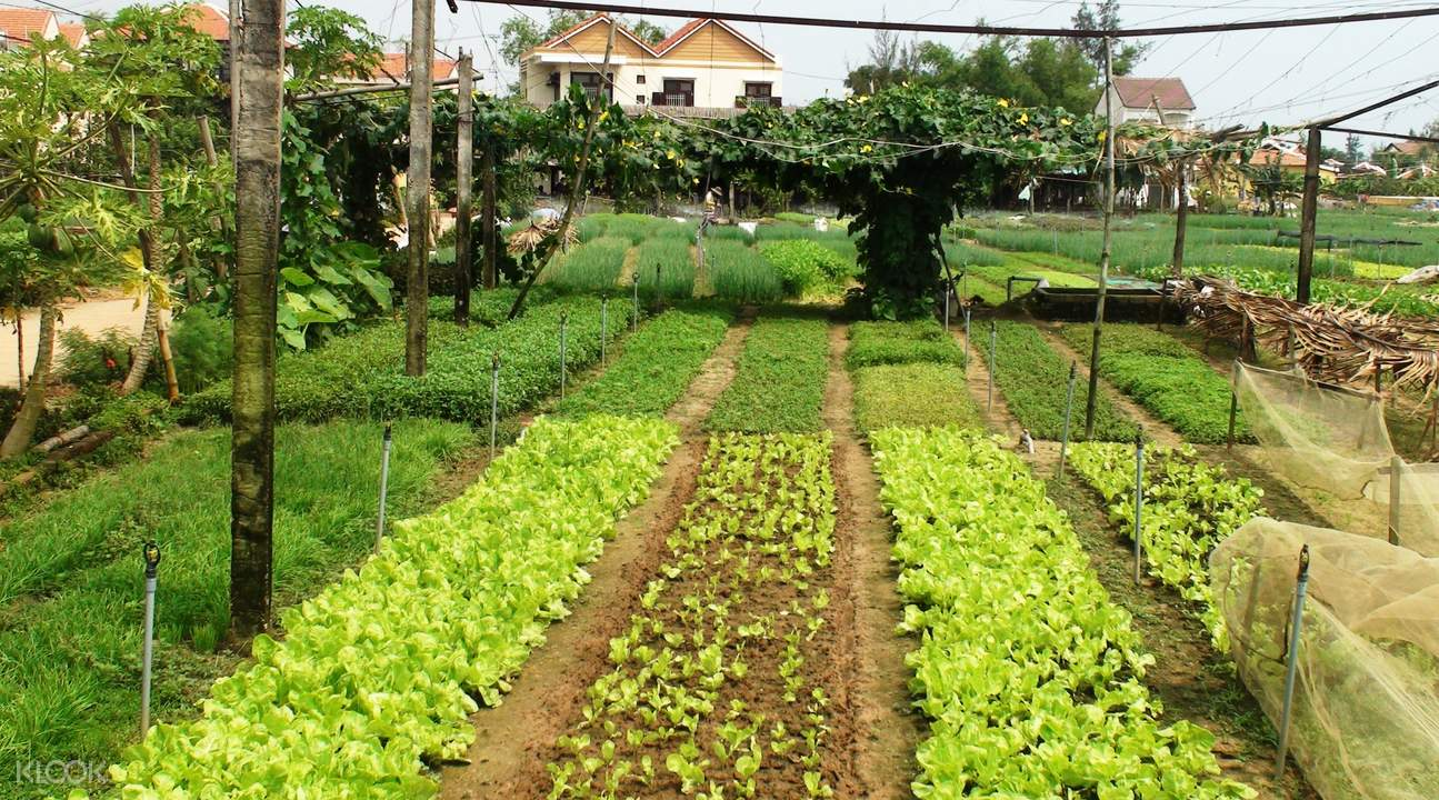 Tra Que Organic Farm