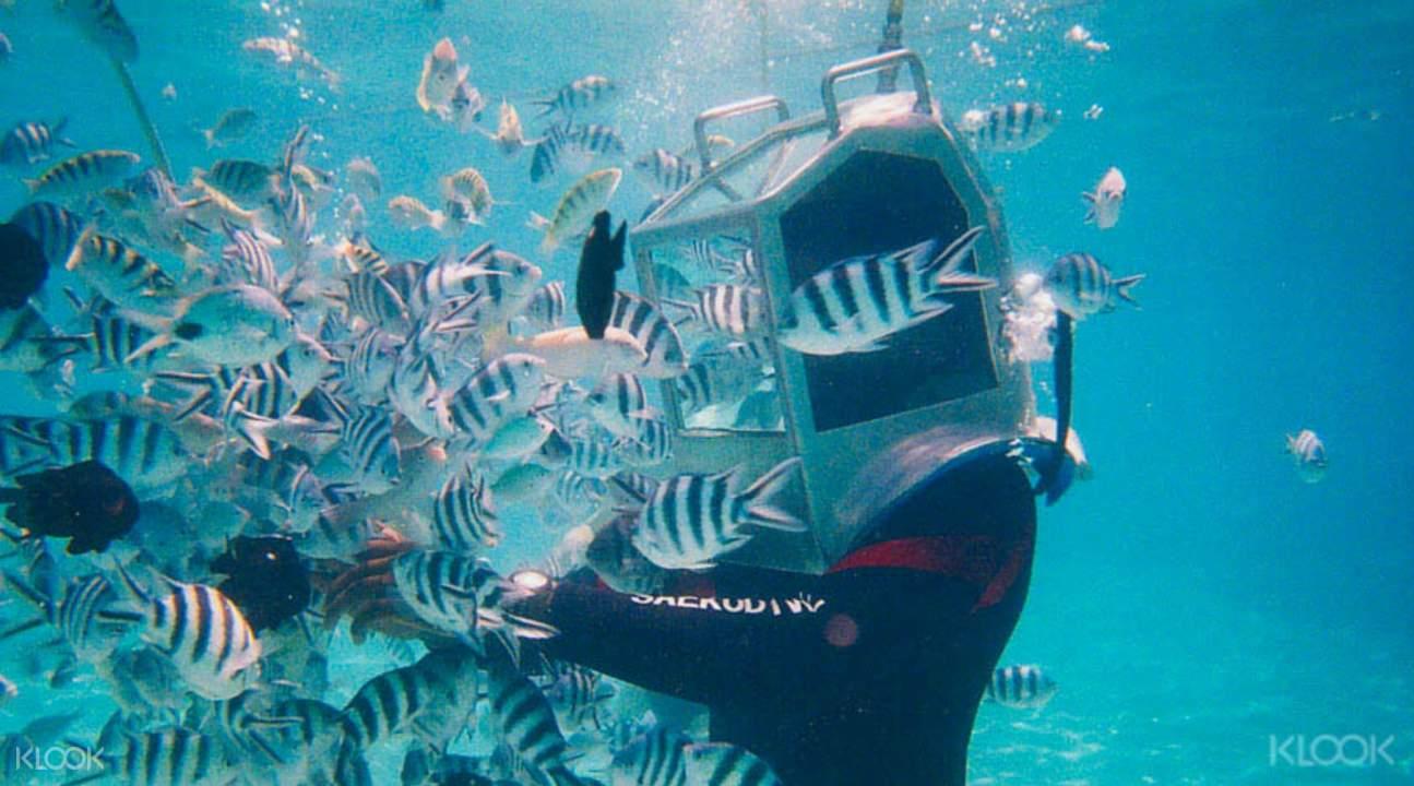 毛裏求斯漫步海底世界
