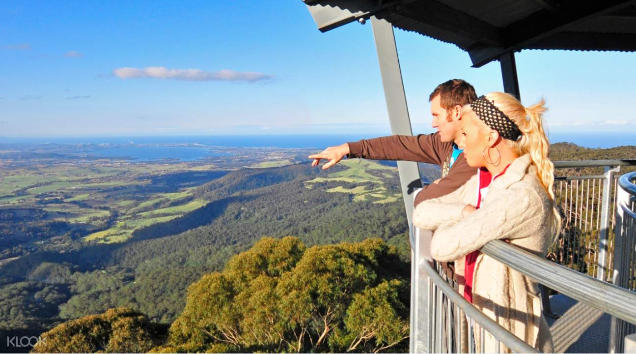 illawarra fly treetop walk family and friends