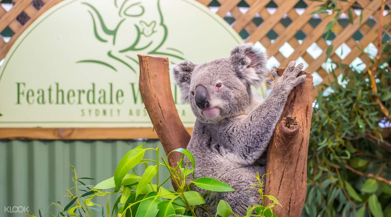 費瑟戴爾野生動物園