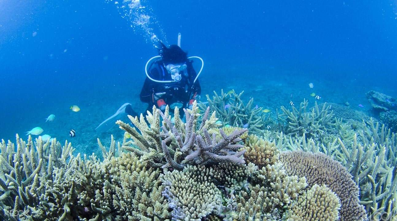 沖繩浮潛和獨木舟3