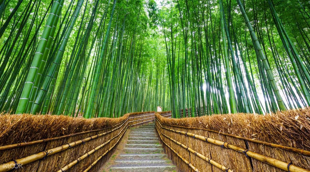 Bamboo Forest in Arashiyama