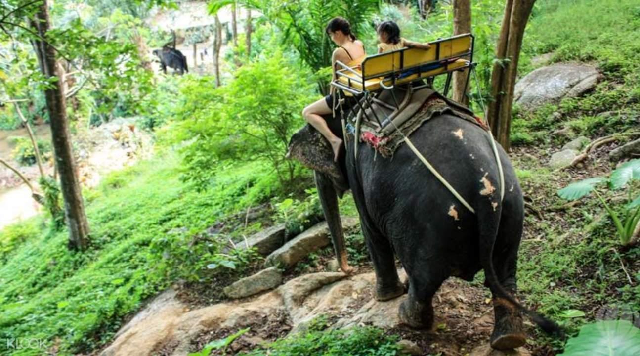 普吉島大象騎行