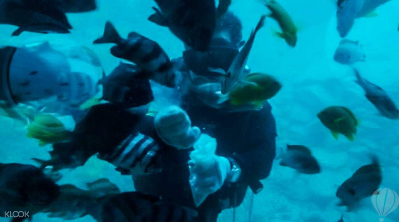 濟州島西歸浦潜水艇