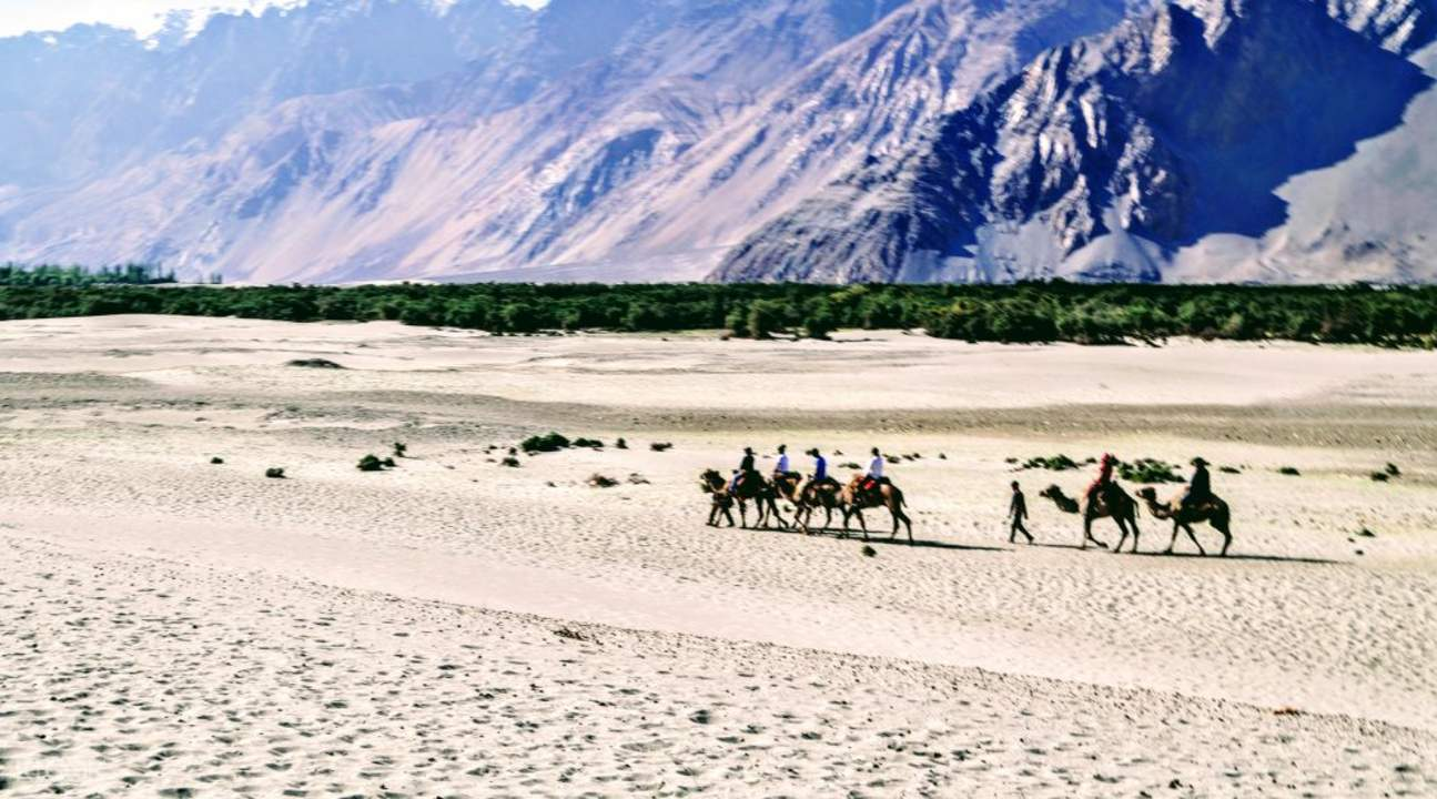 people riding two humped camels in hunder Leh jammu and kashmir