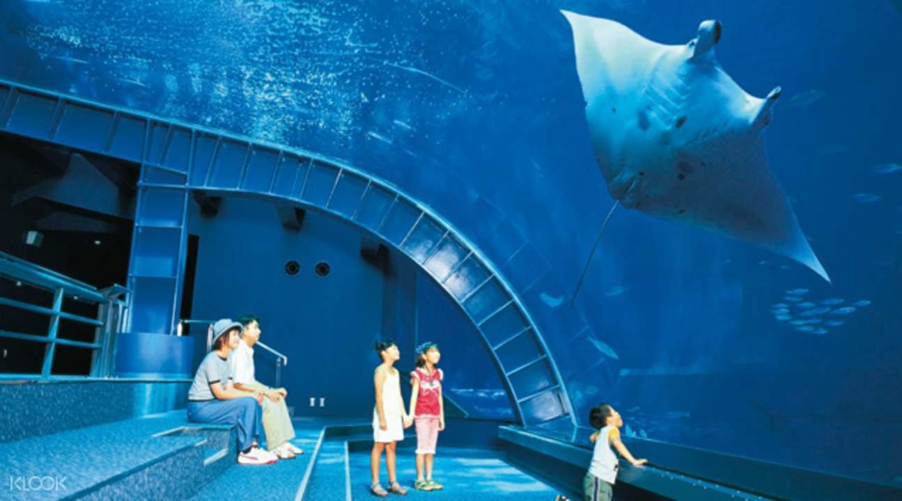 海洋观览室中,享受海底漫步的感受