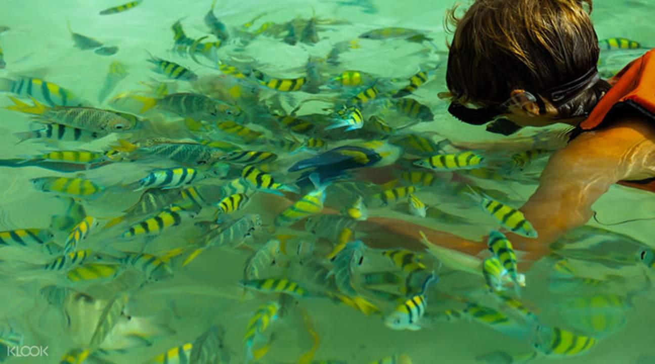 ดำน้ำชมปะการัง บานาน่าบีช