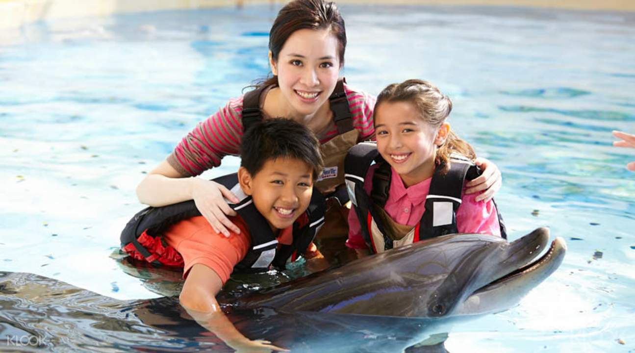 Ocean Park dolphin encounter