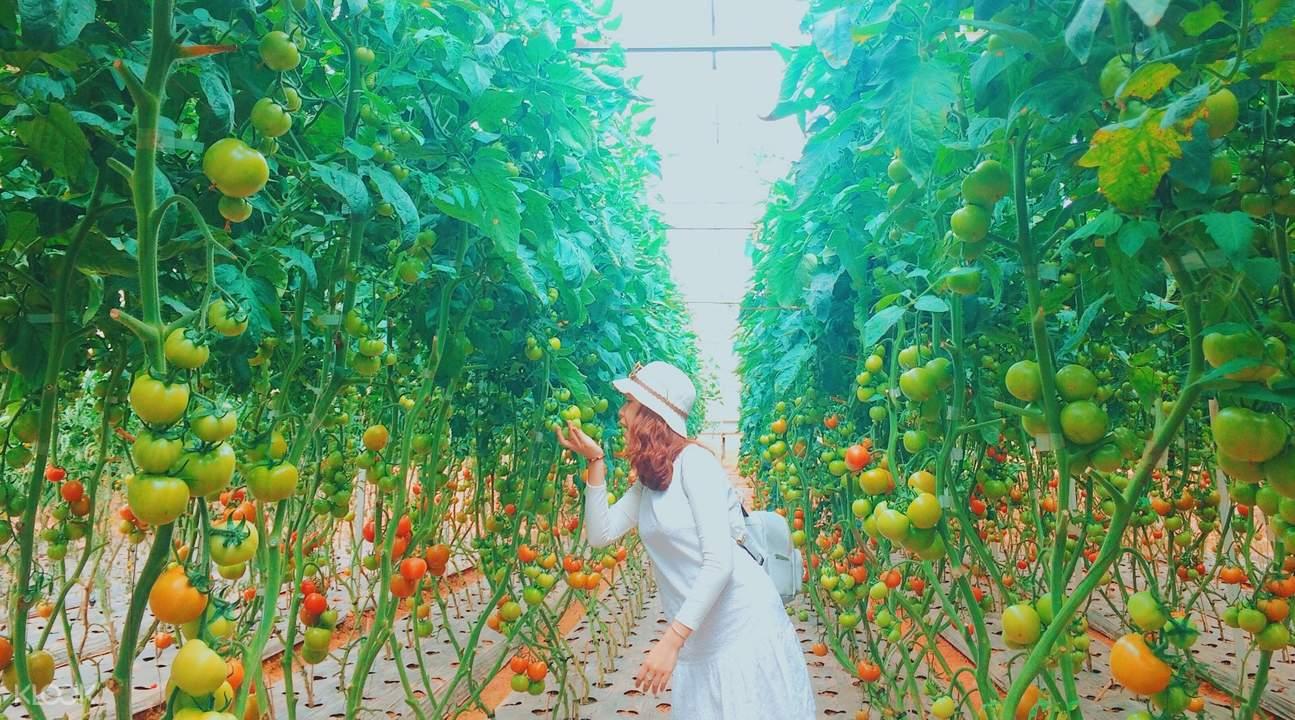 大叻蔬果園