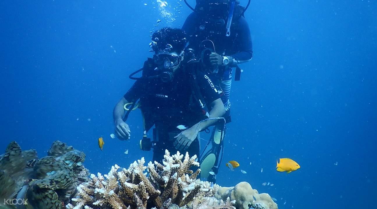 額布里海底探索
