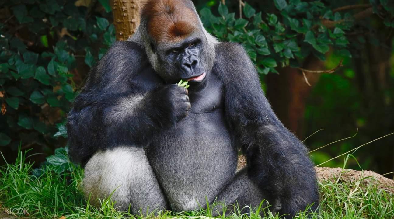 melbourne zoo price