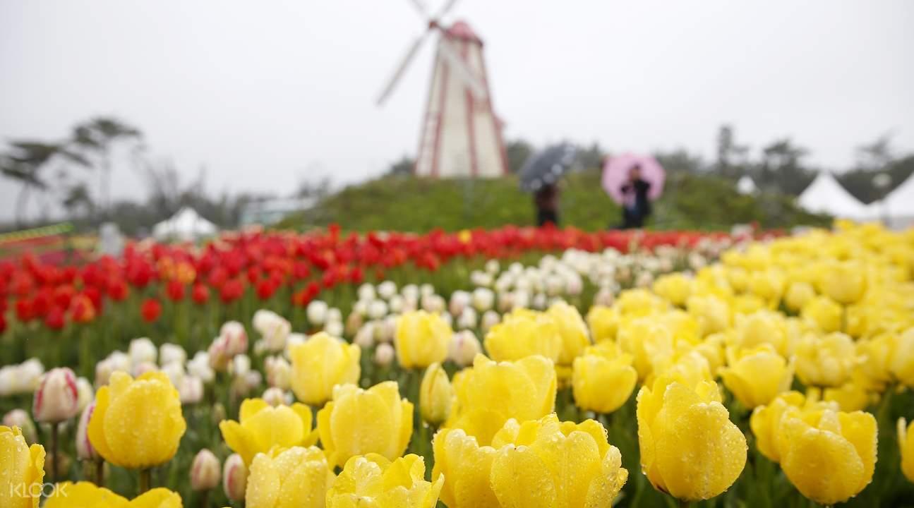Flower Festivals Trip from Seoul