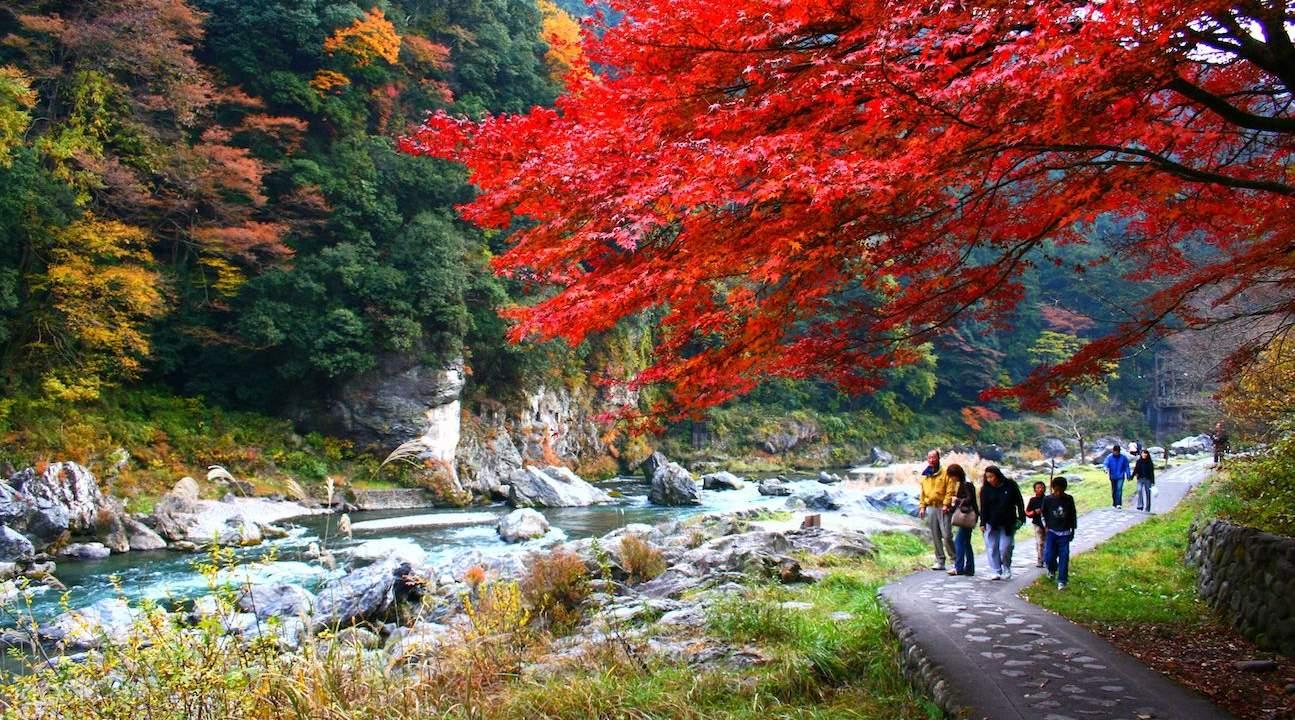 okutama autumn foliage tour, yamanashi prefecture tour, yamanashi prefecturefruit picking, yamanashi prefecturefrom tokyo, okutama from tokyo