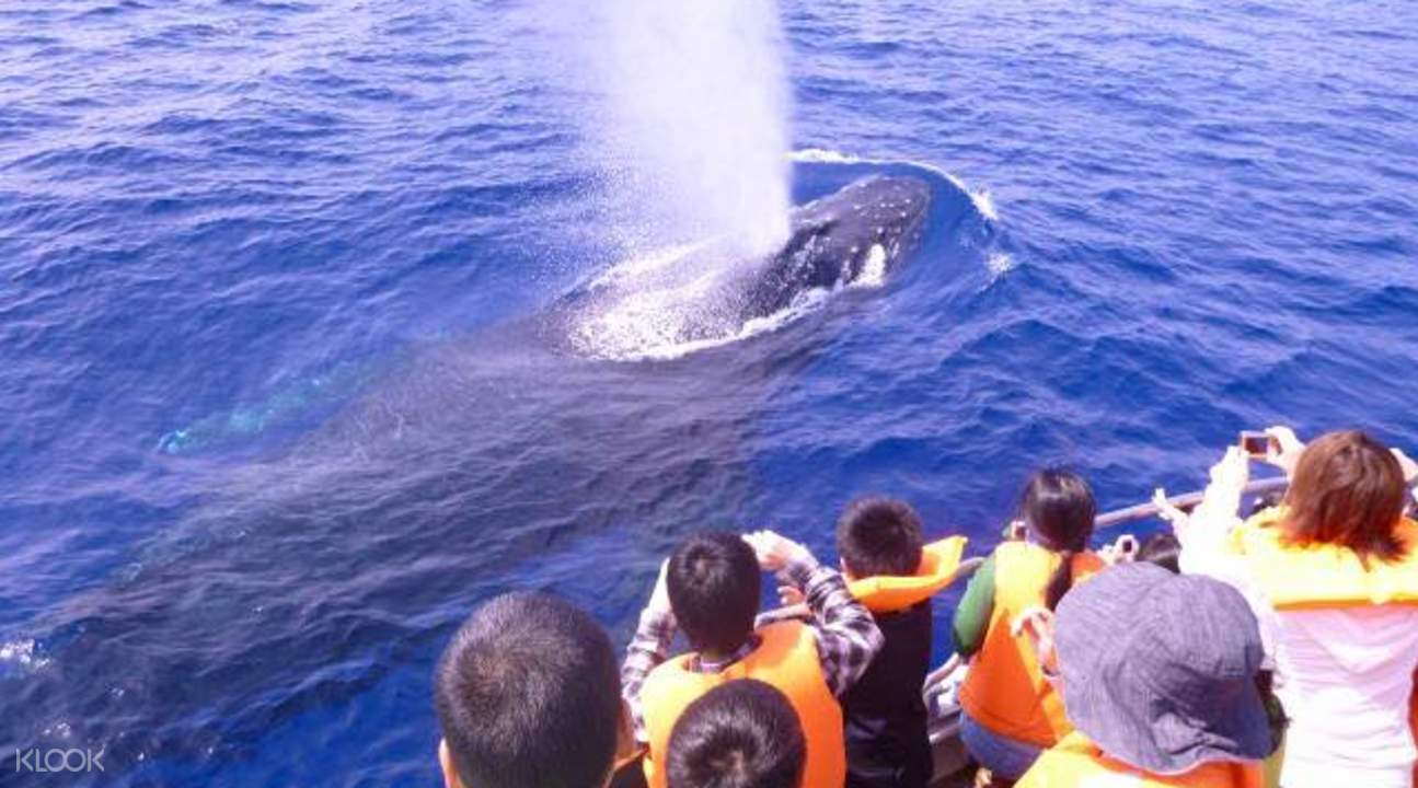 whale watching okinawa