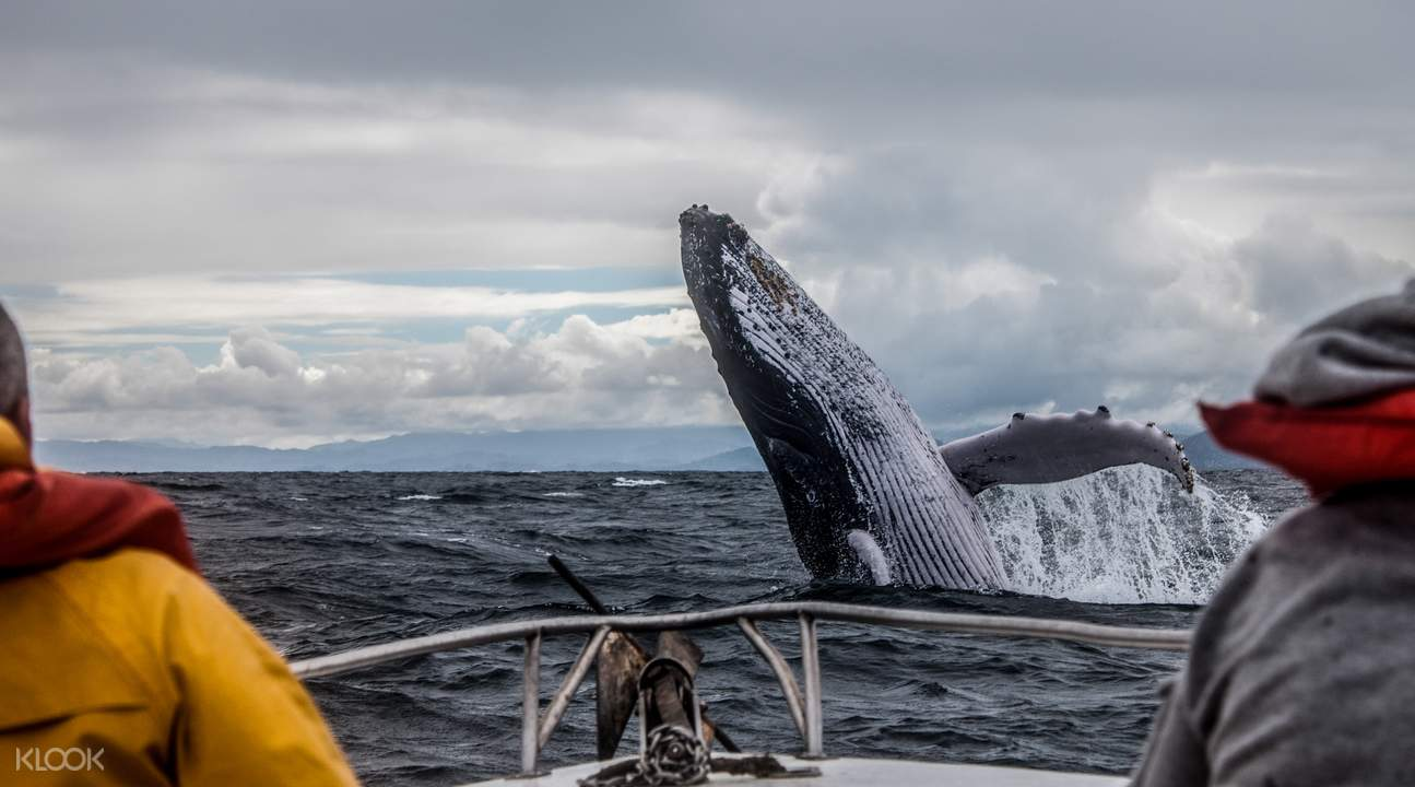 killer whale spotting historical whaling tour