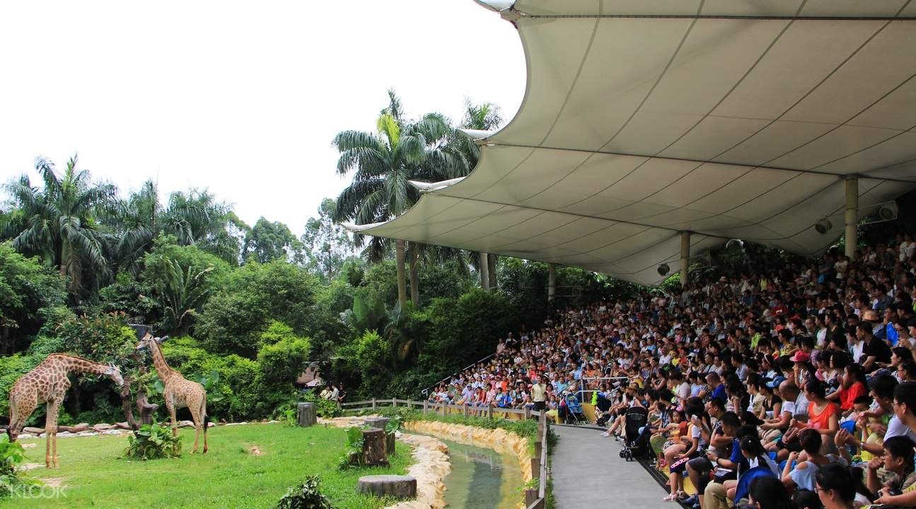 animal shows and attractions at chimelong safari park