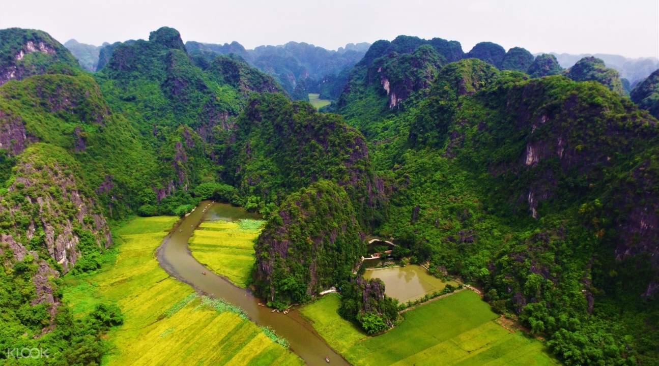 bird's eye view of a rice paddy in vietnam