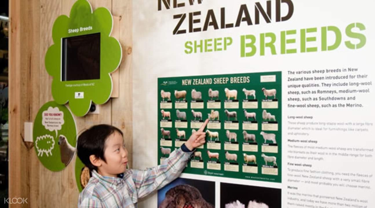 新西兰绵羊世界