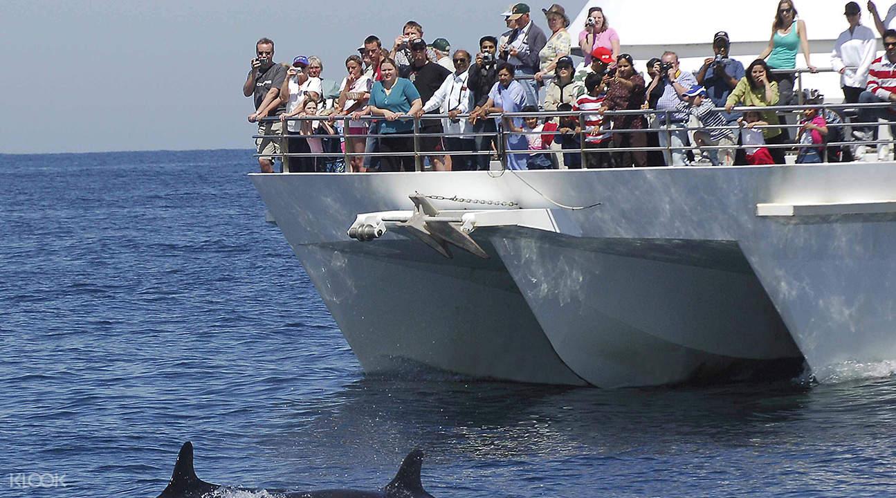 瓦胡岛海豚观赏巡航体验