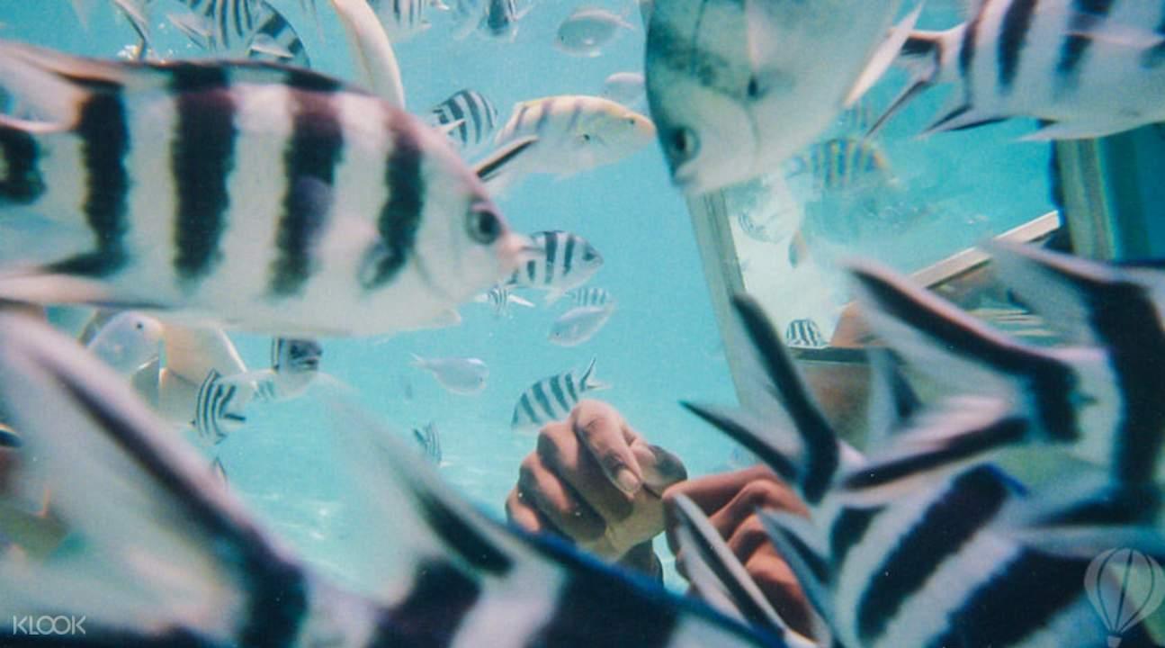 Underwater walk Mauritius