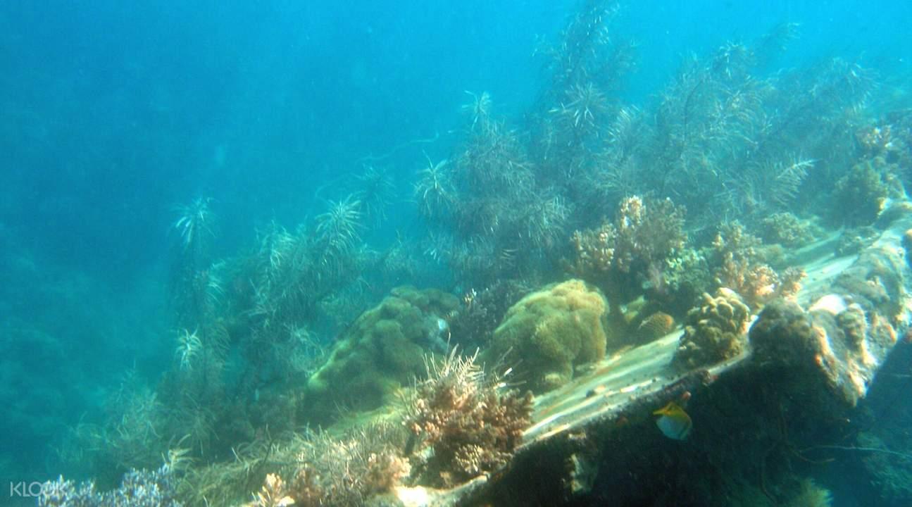 snorkeling coron