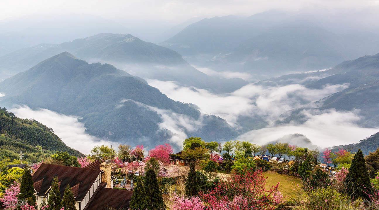 大雪山森賞楓看雲海