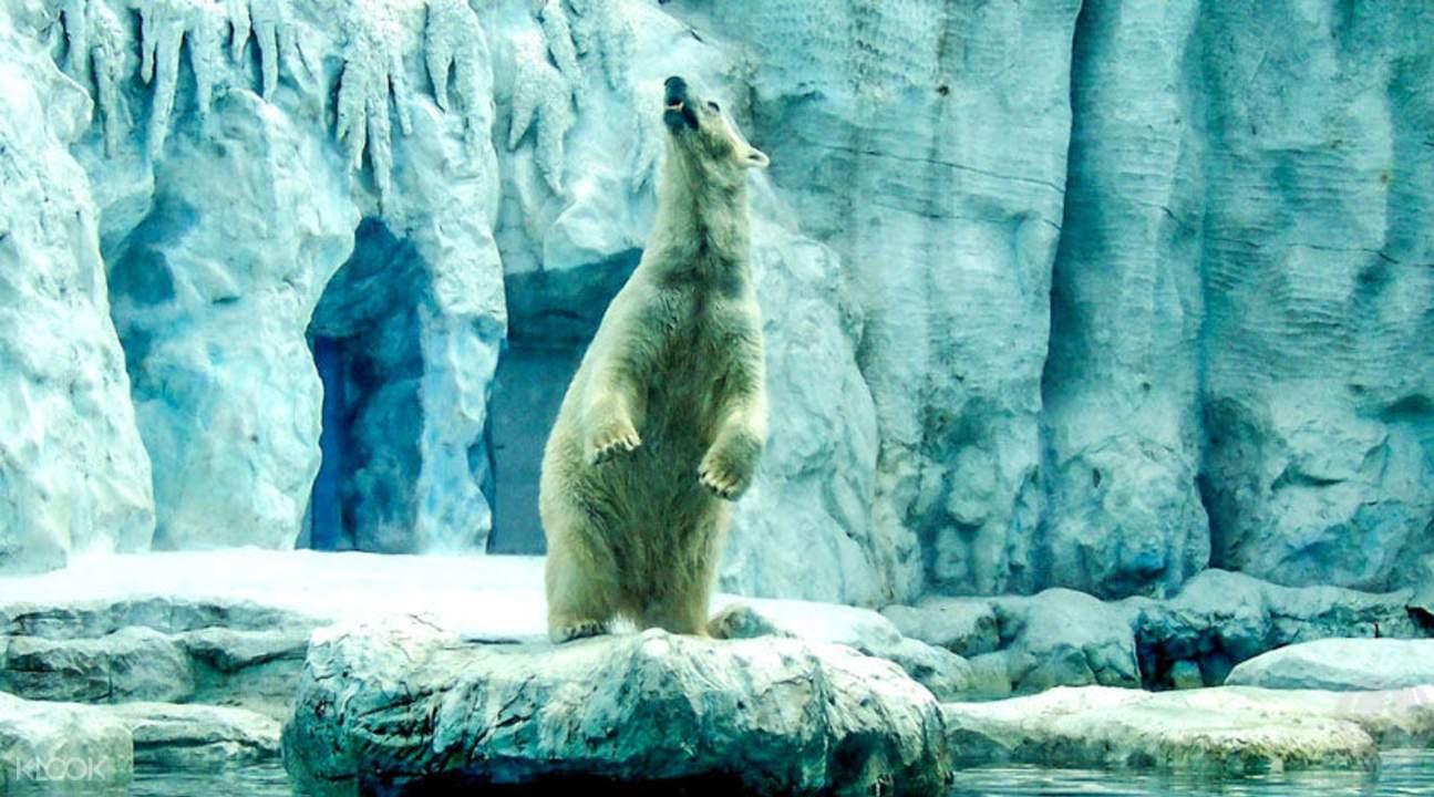 曼谷野生动物园北极熊
