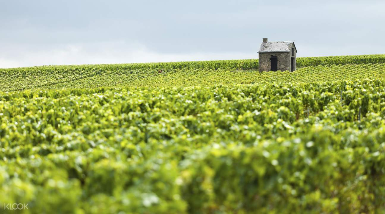 Guided Tour of the Reims Champagne Region